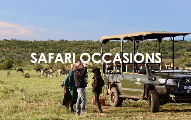 Safari Occasions