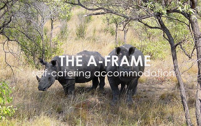 the-a-frame-portfolio-image